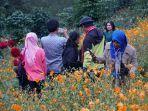 sejumlah-pengunjung-menikmati-panorama-alam-lembah-seribu-bunga.jpg