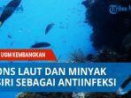 spons-laut-dan-minyak-atsiri-sebagai-antiinfeksi-yang-dikembangkan-dosen-ugm.jpg