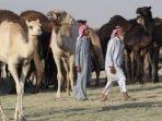 unta-arab-saudi-tribun_20170621_065500.jpg