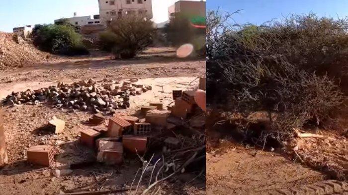 SUNGGUH Hina Dina, Kondisi Kuburan Abu Jahal, Sosok yang Disebut Nabi Muhammad 'Bapaknya Kejahilan'