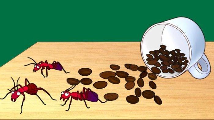 Jangan Langsung Dibuang! Ini 8 Manfaat Ampas Kopi, Mulai Mengusir Semut Hingga Menghilangkan Bau