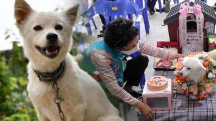 Lansia Terjatuh & Tak Sadarkan Diri di Ladang, Anjingnya Langsung Memeluk Lalu Menjaga Agar Selamat