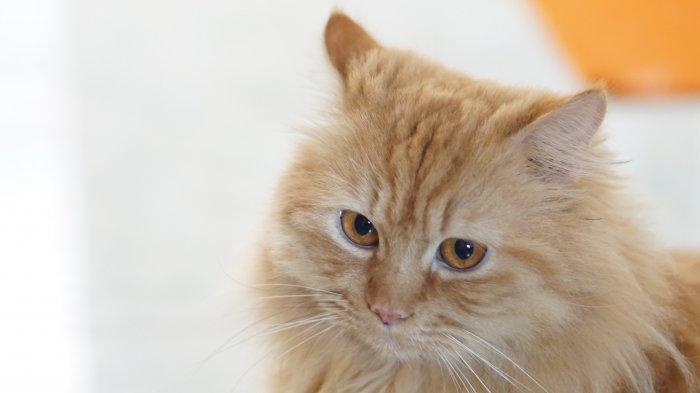 7 Kasus Penyiksaan Kucing di Tanah Air, Dicekoki Minuman Keras hingga Disembelih untuk Dikonsumsi
