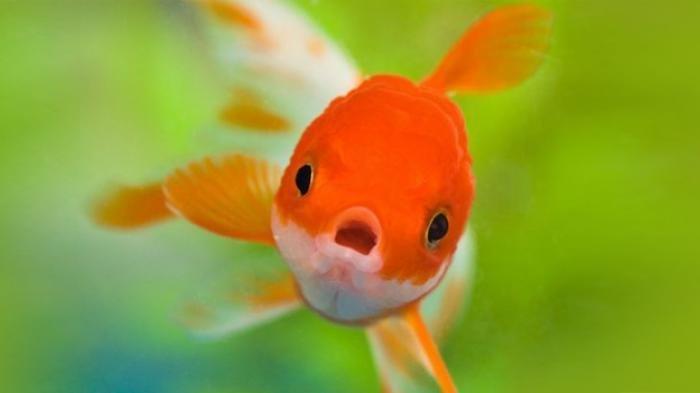♛ Terkini Apa arti mimpi ikan raksasa