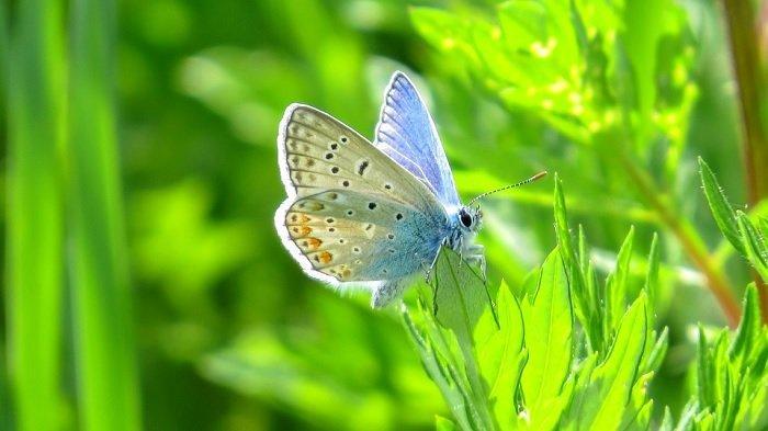Ilustrasi kupu-kupu.
