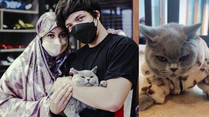 Setelah Kandang Rp 100 Juta, Aurel & Atta Halilintar Beli Baju Branded untuk Kucing, Harga Fantastis