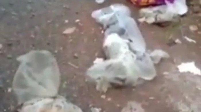 GEGER Puluhan Kucing Mati Dibungkus Plastik Berserakan di Banjarmasin, Berdarah-darah, Kaki Patah