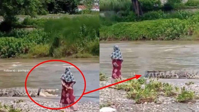 VIRAL Ibu-ibu Santai di Pinggir Sungai Saat Buaya Berkalung Ban Muncul Lagi, Warga Teriak-teriak