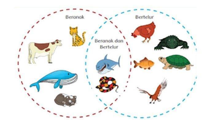 SOAL & KUNCI JAWABAN Tema 1 Kelas 6 Subtema 2 Hal 49-54, Kelompokkan Hewan-hewan ke Diagram Venn