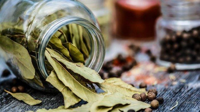 Ilustrasi daun herbal yang dikeringkan.