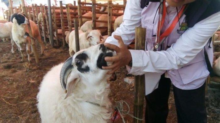 Pemerintah kota Kabupaten Tangerang melakukan pemeriksaan hewan kurban untuk Hari Raya Idul Adha di sebuah pejualan hewan kurban kawasan Cikupa, pada Rabu (15/8/2018).