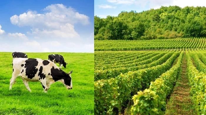 Hewan Ternak Tetangga Selalu Makan Tanaman di Ladangnya, Pria Ini Lalu Lakukan Hal yang Nekat