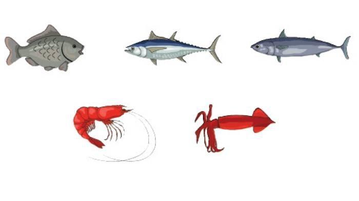 KUNCI JAWABAN Tema 8 Kelas 3 SD Subtema 3 Halaman 135-144, Berbagai Ikan yang Biasa Dikonsumsi