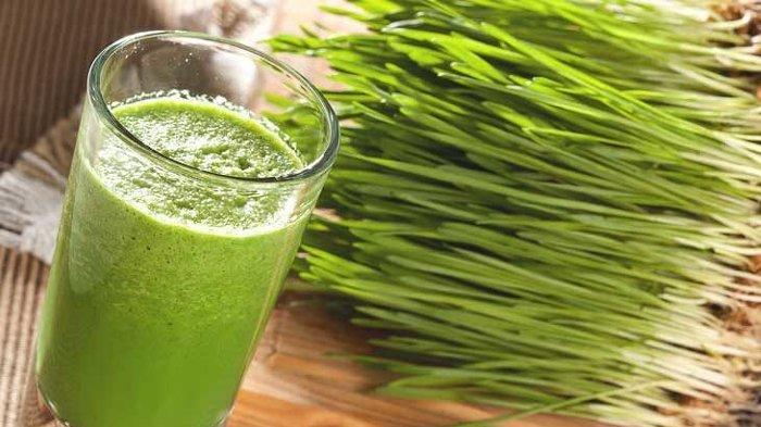 Cara Ampuh Dongkrak Imun Tubuh, Resep Sehat dr Zaidul Akbar, Pakai Wheatgrass hingga Alpukat