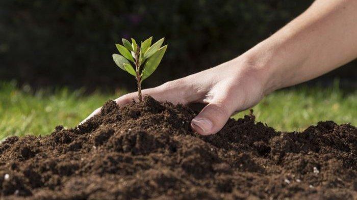 Mengenal komponen-komponen penyusun tanah