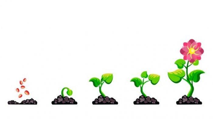Ilustrasi tumbuhan
