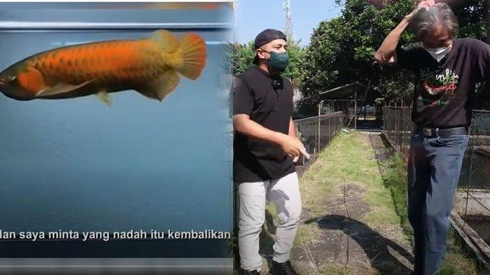 'Habis Tak Bersisa' Tangis Teman Irfan Hakim, 500 Ikan Arwana Dicuri Saat Kena Covid, Rugi Rp 24 M