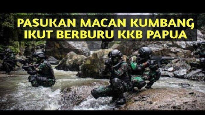 Pasukan Macan Kumbang, TNI. Ikut diterjunkan untuk menumpas Kelompok Kriminal Bersenjata di Papua