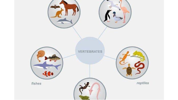 Apa yang Dimaksud dengan Hewan Vertebrata? Berikut Ciri-ciri Lengkap Beserta Klasifikasinya!