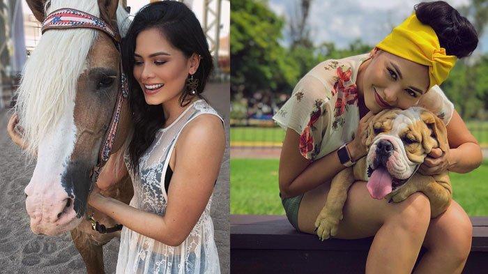 Deretan Pesona Andrea Meza, Lihat Potret Juara Miss Universe 2020, Ternyata Penyayang Hewan