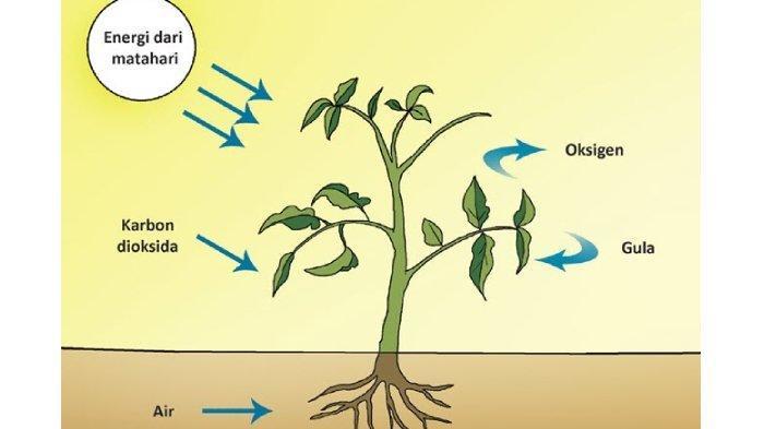 Kenali Faktor-faktor yang Mempengaruhi Proses Fotosintesis, Berikut Penjelasan Lengkapnya!