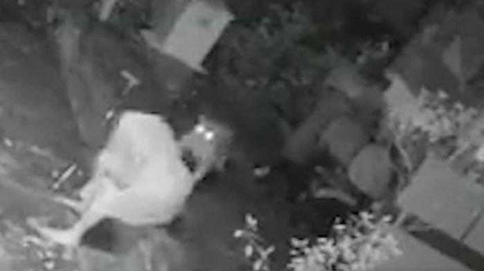 TANGGUH Wanita 55 Tahun Lawan Macan Tutul Pakai Tongkat Sendirian, Beberapa Anggota Tubuh Kena Cakar
