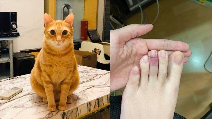 KEBELET BAB Kucing Oren Lari Kencang ke Kotak Pasir, Tabrak Pemiliknya hingga Terkilir, Dokter Heran