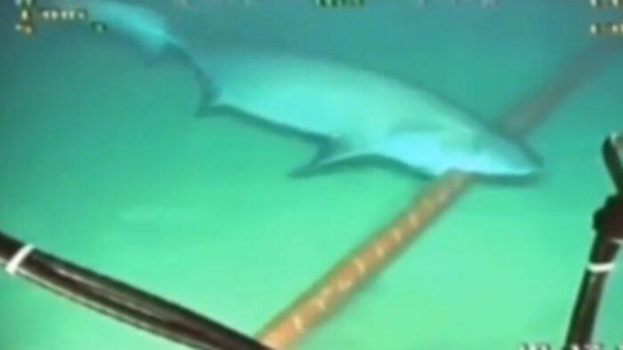 Video seekor hiu menggigit kabel di dasar laut, beredar di media sosial. Ini faktanya.