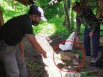 ambing-mati-misterius-kembali-ditemukan-di-kecamatan-cibingbin-kabupaten-kuningan.jpg