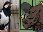burung-jalak-suren-dan-ilustrasi-pencurian.jpg