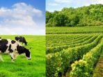 ilustrasi-hewan-ternak-makan-tanaman-ladang-tetangga.jpg