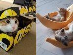 kucing-sembunyi.jpg