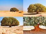 pohon-sahabi.jpg