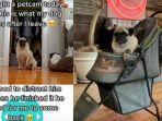 PEMILIK Pasang Kamera untuk Tahu Aktivitas Anjingnya, Malah Temukan Ini, 'Jangan Tinggalkan Dia '