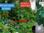 viral-anggota-bnn-mencari-tanaman-hias-di-hutan.jpg