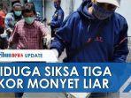 youtuber-siksa-monyet-demi-subscriber.jpg