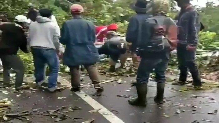 Pohon Tumbang Sempat Ganggu Akses Jalan Raya Bukittinggi - Palembayan, Warga Turun Gotong Royong