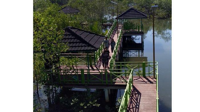 Apar Pariaman Mangrove Park Spot Liburan Di Pariaman Suguhkan Wahana Berjalan Kaki Di Atas Rawa Tribun Padang