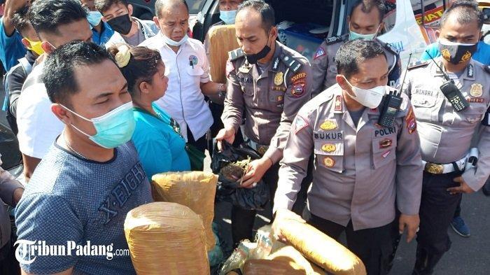BREAKING NEWS - Polantas Cegat Terduga Kurir Ganja di Padang, BB Terbungkus Mirip Batu Bata