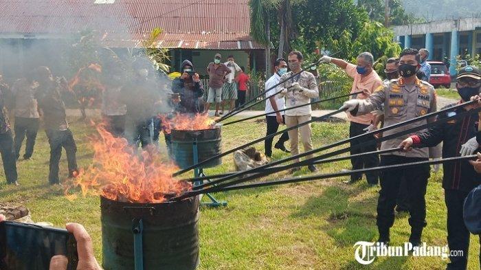 53,1 Kg Ganja Dibakar BNNP Sumbar, Apinya Membara, Asapnya Mengepul