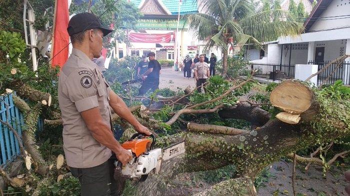 Pohon Dadok Tumbang di Depan Kantor Kemenag Sumbar, Lampu Jalan di Parupuk Tabing Sempat Terbakar