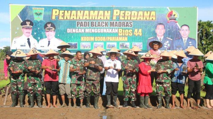 Danrem 032/Wirabraja Langsung Tanam Padi Black Madras Perdana di Padang Pariaman, Pakai Bios 44