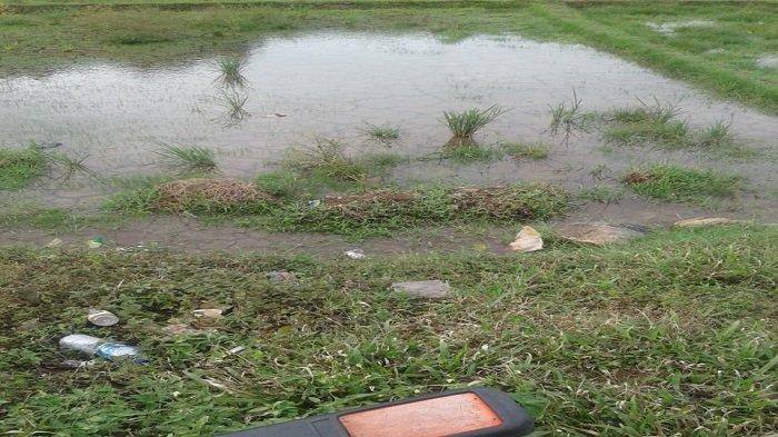 Hujan Guyur Kota Padang, Petak Sawah yang Sempat Kering Kembali Digenangi Air
