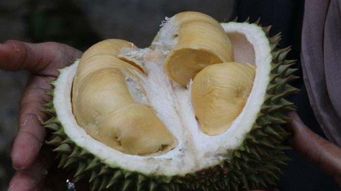 Beda dengan Indonesia, Orang Korea Selatan Punya Cara Unik Buka Durian, Videonya Viral di Medsos
