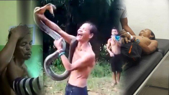 2 Gigitan King Kobra Bersarang di Tangan dan Kening Norjani Saat Atraksi, Demam Sebelum Tewas