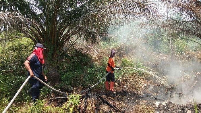 20 Ha Kebun Sawit di Tanjung Mutiara Terbakar, BPBD Agam Ungkap Kronologi Hingga Kondisi Terkini