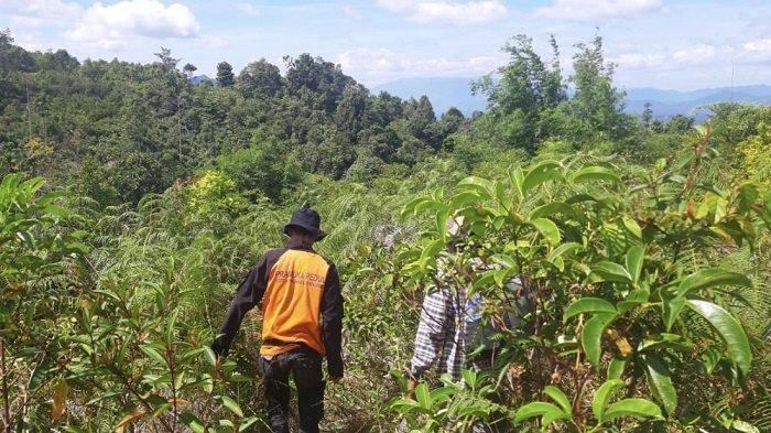 Petugas berupaya mencari warga yang hilang di kawasan hutan, Jorong Talang Maua, Kecamatan Mungka, Kecamatan Limapuluh Kota, Provinsi Sumatera Barat (Sumbar), hingga Rabu (21/7/2021). Sebelumnya, warga tersebut dikabarkan berziarah pada Kamis (15/7/2021) lalu.