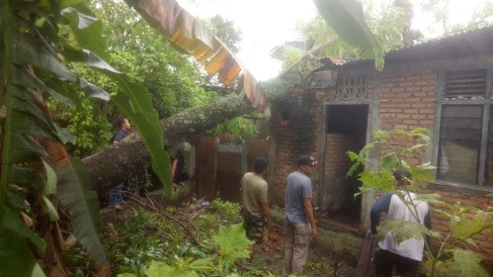 Pasca Hujan dan Angin Kencang Mengakibatkan Pohon Tumbang dan Menimpa Rumah Warga di Kota Padang