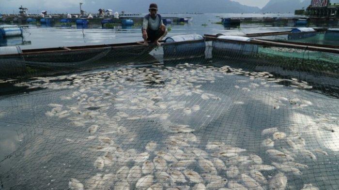 Menko Luhut Ingin Tambak di Danau Maninjau Dikurangi, DKP Sumbar: Bertahap, Tidak Bisa Tiba-tiba