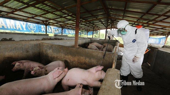 Virus ASF Merebak, Penjualan Daging Babi di Padang Tak Dilarang,Dinas PKH Sumbar Tetap Awasi